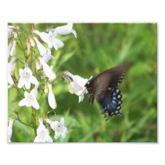 Blue Butterfly and white wildflowers Art Photo