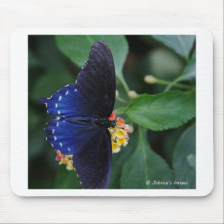 Blue Butterfly Mouse Pad
