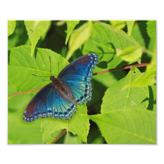 Blue Butterfly Photograph