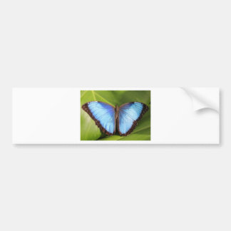 Blue Butterfly Post Card Car Bumper Sticker
