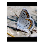 Blue butterfly post cards