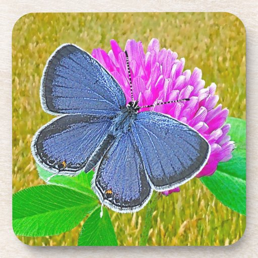 Blue Butterfly, Red Clover Cork Coaster