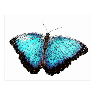Blue Butterfly Sketch Post Card