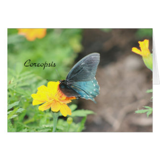 Blue Butterfly Yellow Coreopsis Summer Card