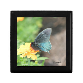Blue Butterfly Yellow Coreopsis Summer Products Gift Box