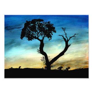 """""""Blue Cerrado"""" by Connie LePhiew Photo"""