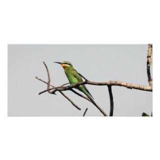 Blue-cheeked Bee-eater Photo Greeting Card