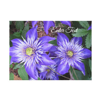 Blue Clematis Flowers Canvas Print