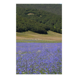 Blue colored fields with cornflowers customised stationery