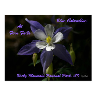 Blue Columbine At Fern Falls Postcard
