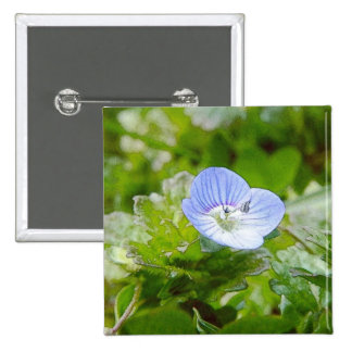 Blue Creeping Speedwell Blooms Pinback Button