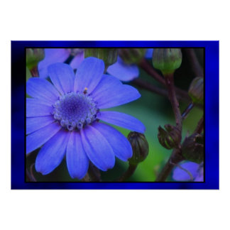 Blue Daisy Flower Posters