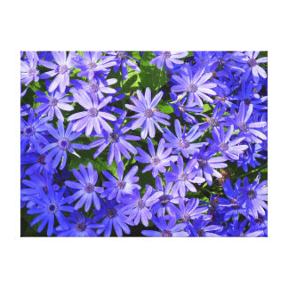 Blue Daisy-like Flowers Canvas Print