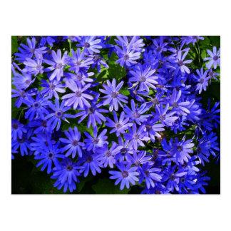 Blue Daisy-like Flowers Nature Photography Postcard