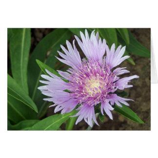 Blue Danube Stokes aster flower Greeting Card