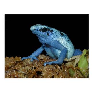 Blue Dart Frog (Dendrobates azureus).jpg Postcard