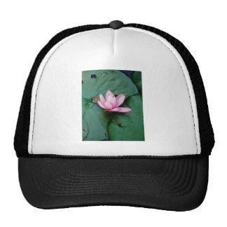 Blue Dragonflies on a pink lotus flower Cap