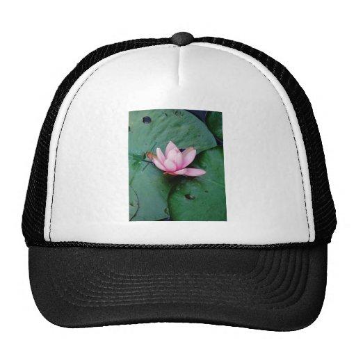 Blue Dragonflies on a pink lotus flower Mesh Hat
