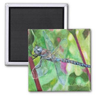 Blue Dragonfly Magnet