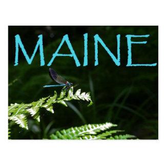 Blue Dragonfly Postcards