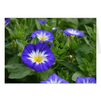 Blue Ensign Morning Glory Flower Greeting Card