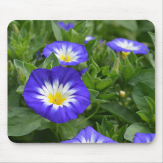 Blue Ensign Morning Glory Flower Mouse Pads