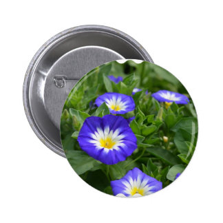 Blue Ensign Morning Glory Flower Pins