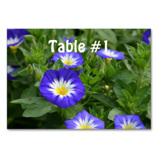Blue Ensign Morning Glory Flowers Table Card