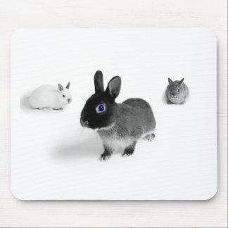 Blue Eye Bunnies Mousepads