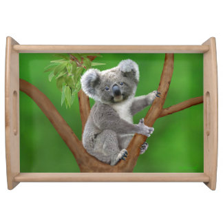 Blue-Eyed Baby Koala Bear Serving Tray