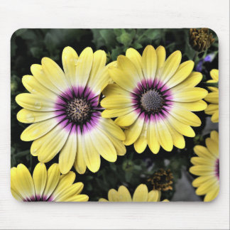 Blue Eyed Beauty African Daisy Osteospermum Mouse Pad