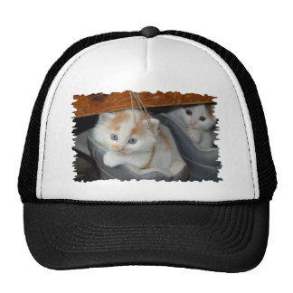 Blue Eyed, Brown and White patched Kitten in boot Cap