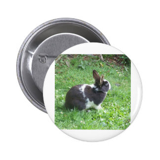 Blue eyed bunny pinback button