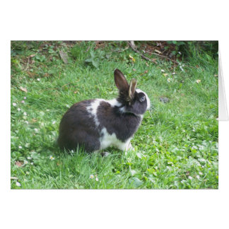Blue eyed bunny greeting card
