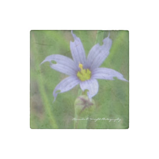 Blue-Eyed Grass Magnet