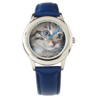 Blue Eyed Grey Fluffy Kitten, Watch