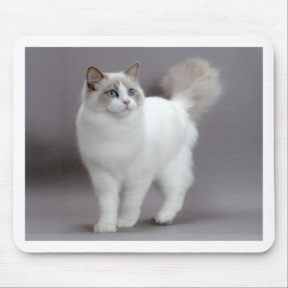 Blue-Eyed Ragdoll Cat Purfection Mouse Pad