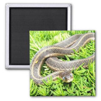 Blue Eyed Snake magnet