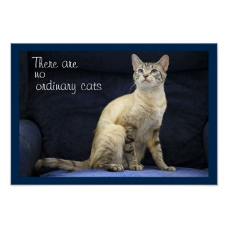 Blue-Eyed Tabby Poster