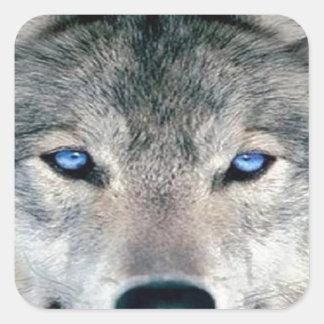 Blue Eyed Wolf Square Sticker
