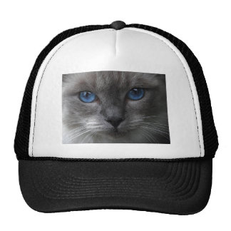 Blue Eyes Cap