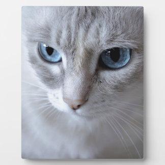 Blue Eyes Kisa Cat Plaque