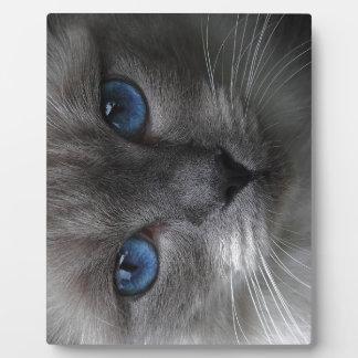 Blue eyes plaque