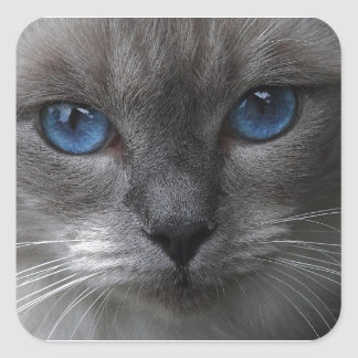 Blue eyes square sticker