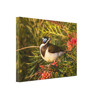 Blue Faced Honeyeater Bird Stretched Canvas Print