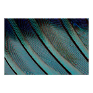 Blue feather pattern poster