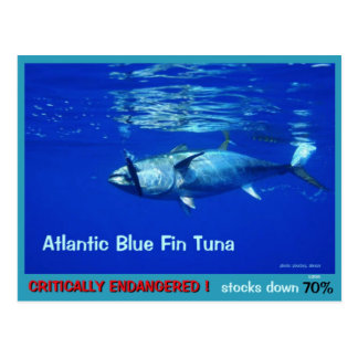 Blue Fin Tuna, overfished, endangered, near gone - Postcard