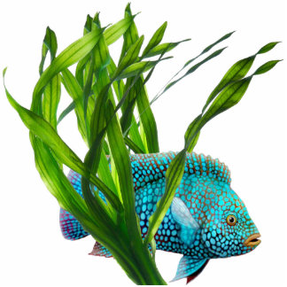 Blue Fish in Seaweed Ornament Photo Sculpture Decoration