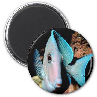 blue fish magnet