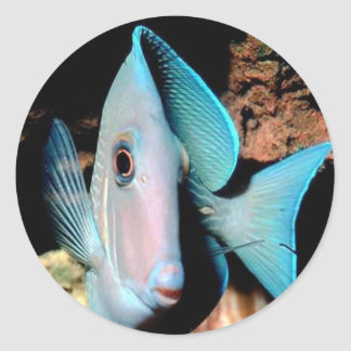 blue fish round stickers